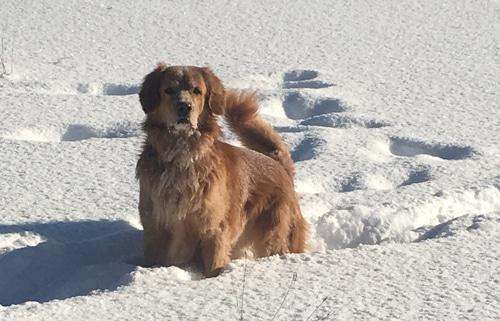 Schneeeee… und Yuma mittendrin….