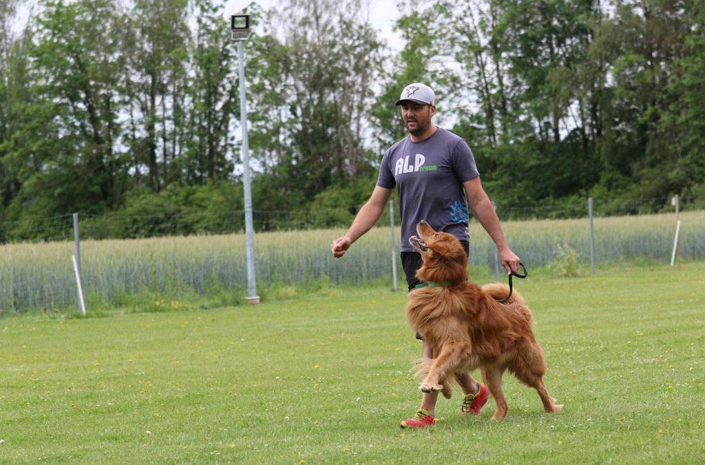 Yuma beim Training mit Karl-Heinz